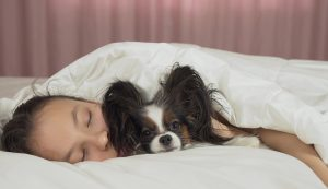 Teen Girl Sleeping Sweetly In Bed With Papillon Dog in Miramar, FL. She is having sleep problems and suffering from insomnia and a lack of sleep. Get sleep hygiene tips in Florida from Counseling solutions of Broward.
